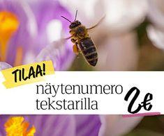 Istutusten ja nurmikon rajaus - Kotipuutarha Bee, Garden, Honey Bees, Garten, Lawn And Garden, Bees, Gardens, Gardening, Outdoor