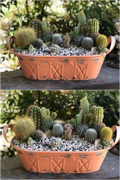 Com Acrylic pour painting - My Life Hane Program Mini Cactus Garden, Cactus House Plants, Cactus Terrarium, Succulent Gardening, Cactus Flower, Succulent Arrangements, Cacti And Succulents, Planting Succulents, Orquideas Cymbidium
