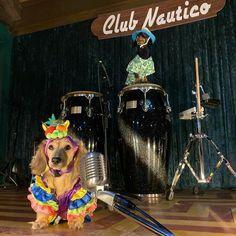 Crusoe The Celebrity Dachshund, Wiener Dogs, Dachshund, Dachshunds