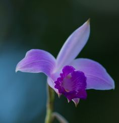 Costa Rican Orchid by Jeff Moore, 500px