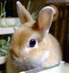 Wild Animals Photos, Animals And Pets, Baby Animals, Funny Animals, Cute Baby Bunnies, Cute Babies, Fox And Rabbit, House Rabbit, Super Cute Animals