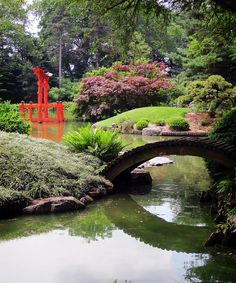 Japanese Pond at Brooklyn Botanical Garden