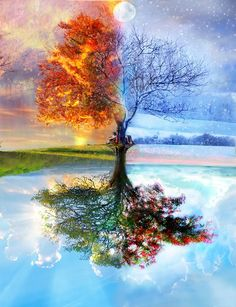 beautiful scenery tree in fall / autumn, winter, spring, and summer