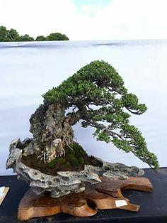 Ikebana, Bonsai Trees, Water, Chinese, Gardening, Paintings, Japanese, Display, Outdoor