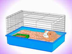 How to Keep Your Guinea Pigs Smelling Good -- via wikiHow.com
