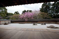 ryoanji temple Asian Architecture, Garden Architecture, Ryoanji, Temple Gardens, Japan Garden, Japanese Gardens, Zen Gardens, Native Plants, Dream Garden
