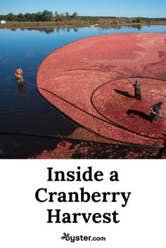 """I'm living out a dream I didn't even realize I had. All I want to do is fall backwards into the bog or do a cannonball into the """"red sea"""" of cranberries -- the ultimate tribute to fall."""