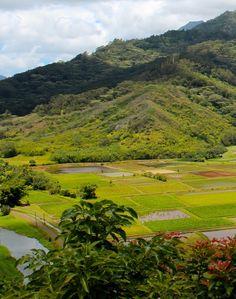 Kauai fields agriculture