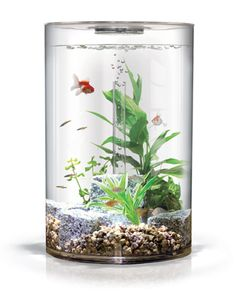 A cheap aquarium design - some ideas in 15 photos che impossible! Having a design cheap aquarium is a t â che impossible! The decorative aquarium is a small glass tray. It is a reproduction of the na. Home Decor