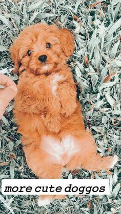 Super Cute Puppies, Baby Animals Super Cute, Cute Wild Animals, Cute Baby Dogs, Cute Little Puppies, Cute Dogs And Puppies, Baby Puppies, Cute Little Animals, Pet Dogs