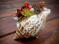 The sea shell is decorated with succulents of polymer clay. Author's work.