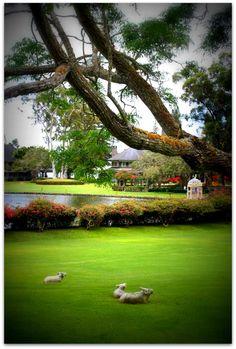 Four Seasons Lanai the Lodge at Koele #Hawaii