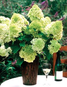 'Limelight' hydrangea boasts lime green blooms on strong stems in spring--a true beauty in the garden or in your favorite vase. Hardy to zone 3, and will grow to 6-8 feet. A beautiful way to add privacy to your yard.    http://emfl.us/kQFd