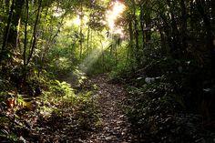 Floresta da Tijuca - Rio de Janeiro - Sunlight streaming through the trees
