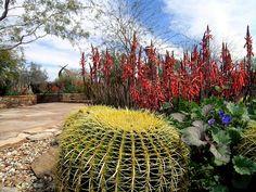 Clic para ampliar Most Beautiful Gardens, Amazing Gardens, Desert Botanical Garden Phoenix, Birmingham Botanical Gardens, Myrtle Tree, Denver Botanic Gardens, Organic Horticulture, Garden Pictures, Tropical Houses
