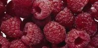 Raspberries for-the-home-outdoors