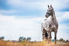 I love animals. Especially horses and puppies. Beautiful Horse Pictures, Beautiful Horses, Leopard Appaloosa, Majestic Animals, Fancy, Puppies, My Favorite Things, Dragons, Spirit