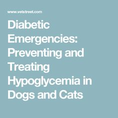 Diabetic Emergencies: Preventing and Treating Hypoglycemia in Dogs and Cats