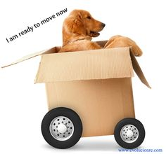 http://www.soniafigueroarealtor.com, Are you moving to Chicago, makes sure you know how to pick your movers. Click on the pic for some quick tips...