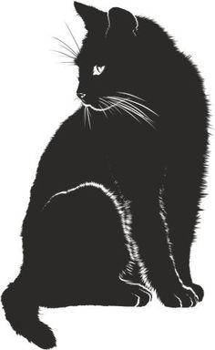 Cat, Shadow, Silhouette, Black