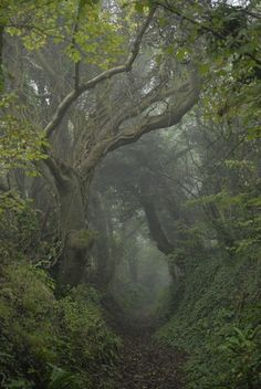 Ideas for landscape photography nature pathways Mystical Forest, Forest Fairy, Forest Grove, Forest Trail, Foggy Forest, Wild Forest, Misty Forest, Forest Path, Magic Forest