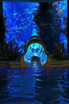 A water slide through a shark tank at the Golden Nugget Casino in Las Vegas, Nevada.