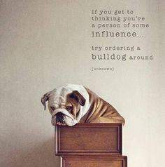 Ya'll Just Have No Ideal!    Big Mack Is The MOST Stubborn Bulldog EVER!   He is something else Thats For Sure!   Gotta Love Him