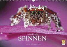 Wunderschöne Spinnen - CALVENDO Kalender - #kalender #spinnen #spinnentier #calvendo