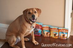 Fuel the Love for Your Dog this Holiday Season with Treats from @ZukesPets