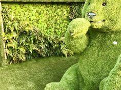 No i  proszę, tu nas jeszcze nie było, połączenie trzech materiałów dekoracyjnych, sztucznej trawy, naturalnych roślin i naszego mchu stabilizowanego. A gdzie to wszystko? Powracamy do #Anglii w ścisłej współpracy z #Easigrass to wszystko można od dzisiaj zobaczyć #Chelsea #Flower #Show #2017. To oni tak pięknie to przygotowali, dzięki Adam Rutecki wiele twojej pracy w tym wszystkim jest, 100% sukcesu.