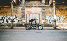 Hookie #8 Harley Davidson Shovelhead