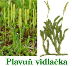 Cactus Plants, Herbs, Health, Biology, Health Care, Cacti, Cactus, Herb, Salud