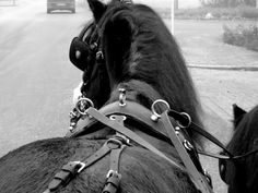 #black #and #white #effect #horse #pony #welsh #riding #holland