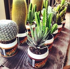 #Cactus in empty #suavecito cans | Show us what you do with them! #pomade #suavecita #recycle