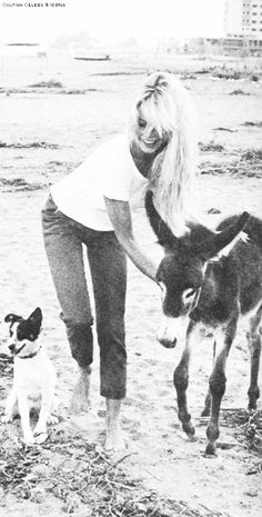 Bridget Bardot and her jack would be cute with dog, film