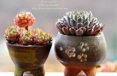 World Of Garden Beys Succulent Bowls, Succulent Gardening, Succulent Arrangements, Container Gardening, Succulents In Containers, Cacti And Succulents, Planting Succulents, Cactus Planta, Cactus Y Suculentas