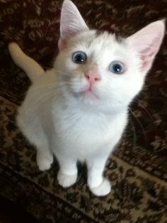 Cutest kitten ever!