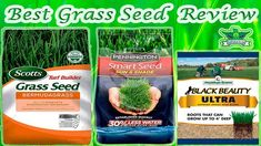 10 Best Grass Seed Reviews | Fast Growing Grass Seed FAQ's & Buying Guide of 2020 | Best Products For You Best Grass Seed, Grass Seed Types, Grow Grass Fast, Growing Grass, Planting Grass Seed, Turf Builder, Jonathan Green