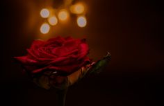 Feel the Love... by Caspario  - Photo 129335863 - 500px