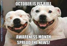 Uplifting So You Want A American Pit Bull Terrier Ideas. Fabulous So You Want A American Pit Bull Terrier Ideas. Love My Dog, Funny Animal Pictures, Funny Animals, Cute Animals, Wild Animals, Animal Pics, Funny Images, Animal Captions, Animal Fun