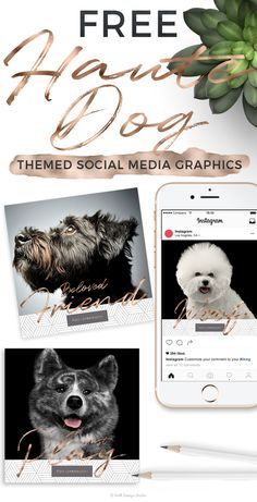 Here is a chic set of pet inspired social media graphics to use for your pet business to help extend your message while celebrating your love of dogs Dog Crafts, Animal Crafts, Pet Branding, Dog Artwork, Animal Graphic, Free Dogs, Animal Projects, Find Pets, Love Pet