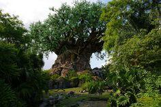 """The Tree of Life"" at Animal Kingdom, Walt Disney World"