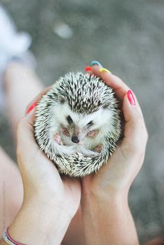 Person holding a cute little hedgehog by Jovana Rikalo