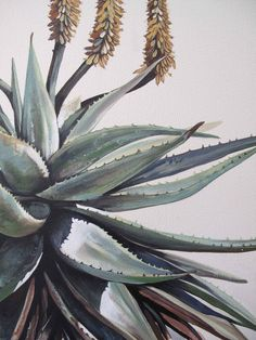 aloes - kurt pio - oil on canvas Cactus Painting, Cactus Art, Painting & Drawing, Protea Art, Art For Art Sake, Leaf Art, Wildlife Art, Botanical Art, African Art