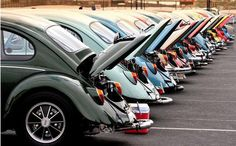 The VW Club line up is utterly Adorable. Volkswagen Classic Bug Beetle. (o\_!_/o)