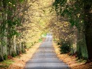 road Country Roads, Lightbox, Autumn, Fall