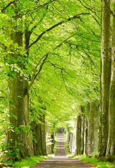 Beech Trees near Scotland's Drummond Castle found at: Before and After: 6 Landscapes Totally Transformed By Fall - CountryLiving.com