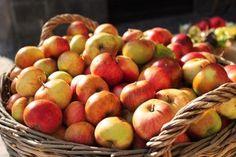 JZ Blog Multimedia, Civilization, Apple, Fruit, Blog, Apple Fruit, Blogging, Apples