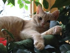 """Cheddar"" on his Fantasy Tree"
