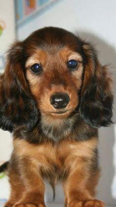Amazing Unknown Chubby Adorable Dog - 72bcfef7fd338686fd8af47e2876c0dd--designer-dog-carriers-designer-dog-clothes  Best Photo Reference_124423  .jpg